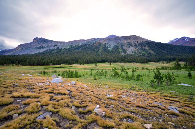 dana meadows6